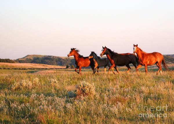 Photograph - Wild Horses At Sunset by Sabrina L Ryan