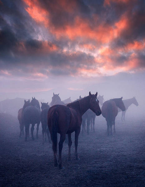 Foggy Wall Art - Photograph - Wild Horses by Cuma Cevik
