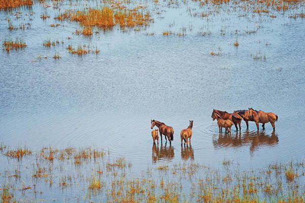 Broome Photograph - Wild Horses In A Wet Field, Broome by Laurenepbath