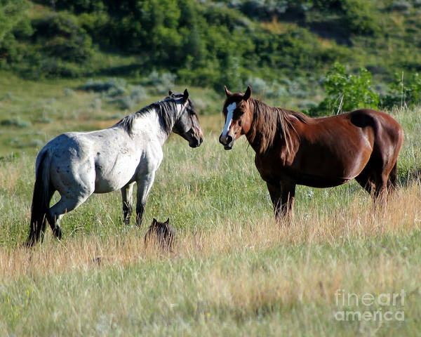 Photograph - Wild Horses In Medora by Sabrina L Ryan