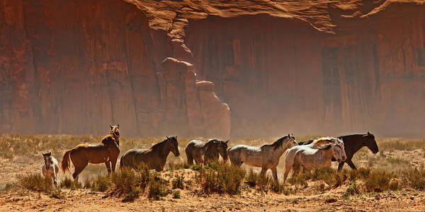 Navajo Indian Reservation Photograph - Wild Horses In The Desert by Susan Schmitz