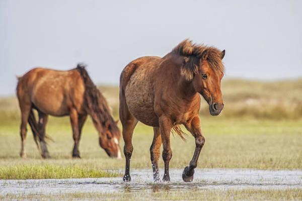 Photograph - Wild Horses On A Walk Across The Flats by Bob Decker