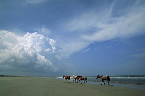 Wall Art - Photograph - Wild Horses Roaming A Georgia Coast by Michael Melford