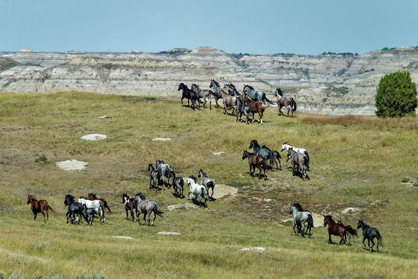 Herd Of Horses Wall Art - Photograph - Wild Horses Stampeding by Mark Newman