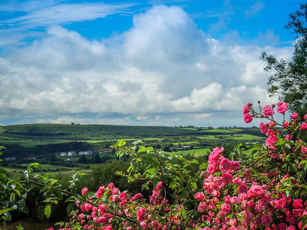 Photograph - Wild Irish Roses Of County Clare by James Truett