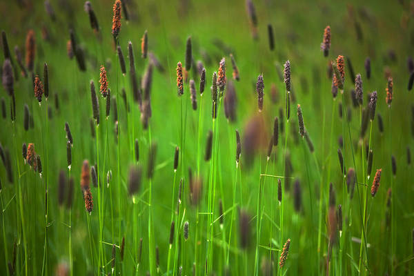 Suir Photograph - Wild Meadow Grass On Waterford Island by Panoramic Images
