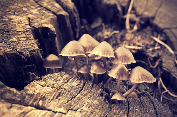 Toadstools Photograph - Wild Mushrooms by Amanda Elwell