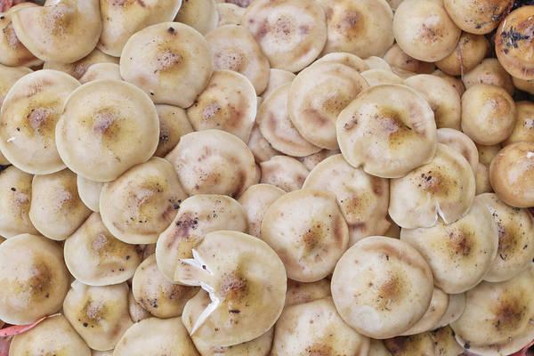 Toadstools Photograph - Wild Mushrooms by Tom Gowanlock