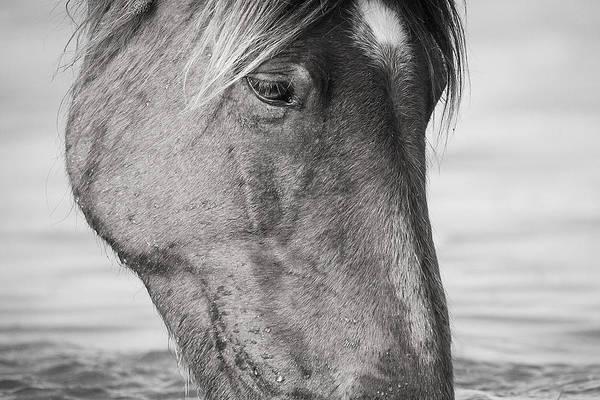 Photograph - Wild Mustang Feeding by Bob Decker