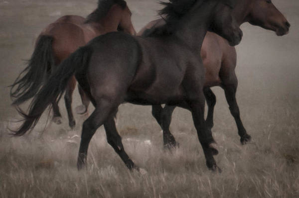 Photograph - Wild Mustangs Of New Mexico 16 by Catherine Sobredo