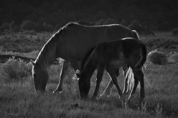 Photograph - Wild Mustangs Of New Mexico 7 by Catherine Sobredo