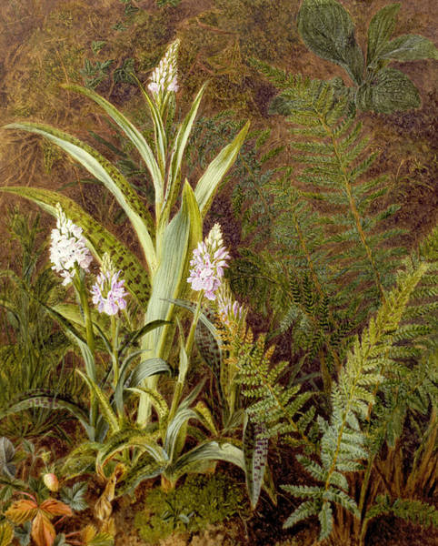 Wild Life Painting - Wild Orchids by Marian Emma Chase