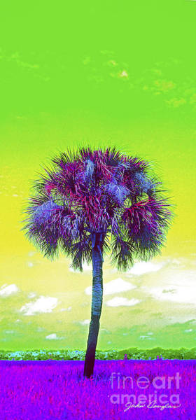 Photograph - Wild Palm 3 by John Douglas
