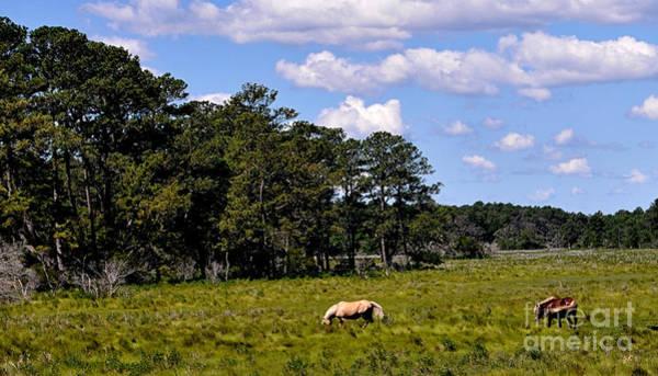 Photograph - Wild Ponies - Assateague Island by Gerlinde Keating - Galleria GK Keating Associates Inc