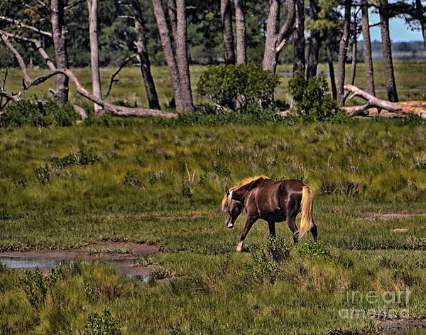 Photograph - Wild Pony On Assateague Island by Gerlinde Keating - Galleria GK Keating Associates Inc
