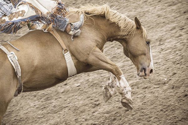 Pferd Photograph - Wild Ride by Caitlyn  Grasso