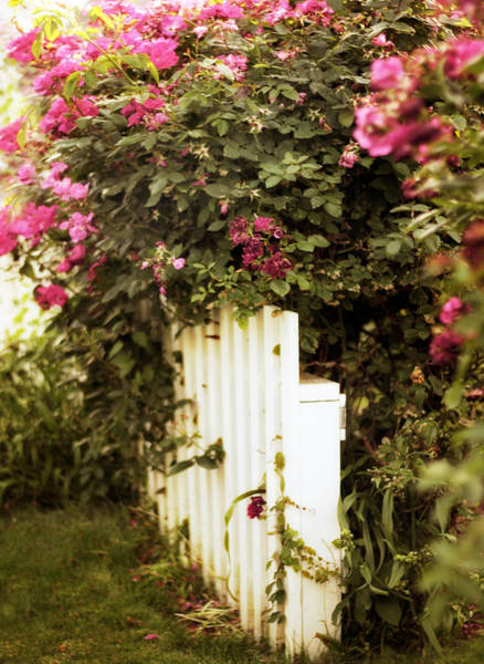 Photograph - Wild Roses by Jessica Jenney