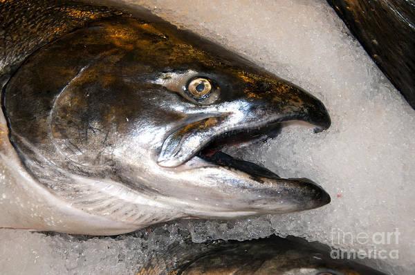 Photograph - Wild Salmon by Brenda Kean