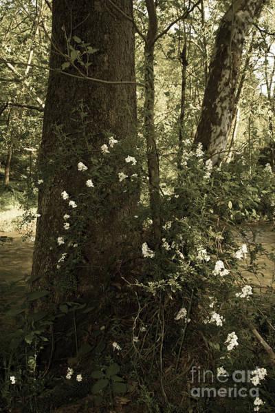 Photograph - Wild Shrub Roses by Chris Scroggins
