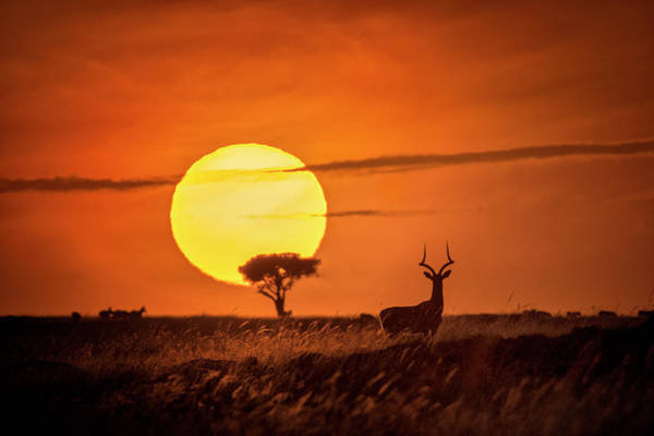 Antelope Photograph - Wild Sunrise by Lucie Bressy