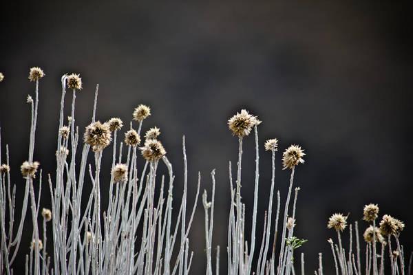 Loftus Photograph - Wild Things 1 by Joel Loftus