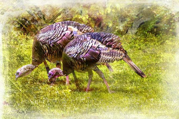 Photograph - Wild Turkey Hens by Barry Jones
