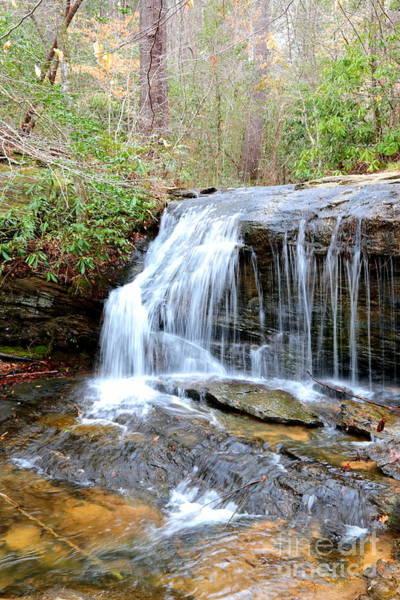 Photograph - Wildcat Branch Falls by Carol Groenen