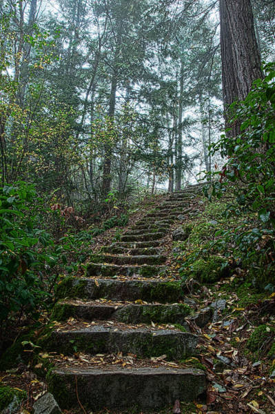 Wall Art - Photograph - Wilderness Stairwell by Monte Arnold