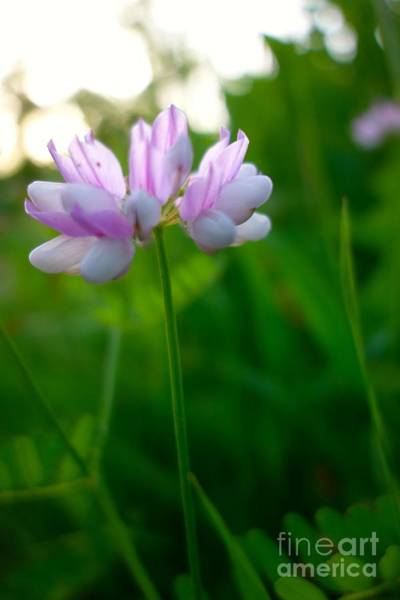 Photograph - Wildflower 2 by Jacqueline Athmann
