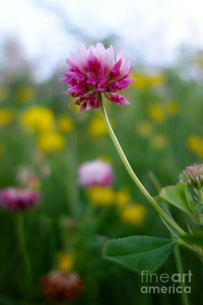 Photograph - Wildflower 4 by Jacqueline Athmann