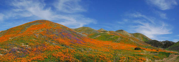 Photograph - Wildflower Extravaganza  by Lynn Bauer