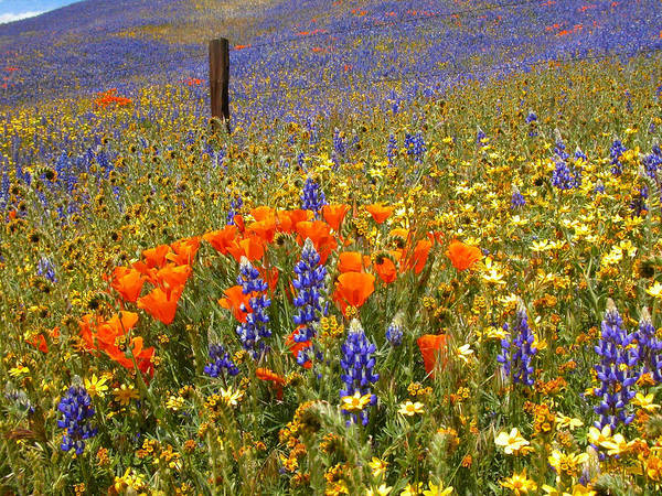 Interstate 5 Wall Art - Photograph - Wildflower Heaven by Lynn Bauer