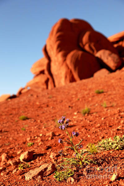 Monument Valley Navajo Tribal Park Wall Art - Photograph - Wildflower Monument Valley by Jane Rix