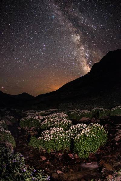 Colorado Photograph - Wildflower Runoff Under The Stars by Mike Berenson / Colorado Captures