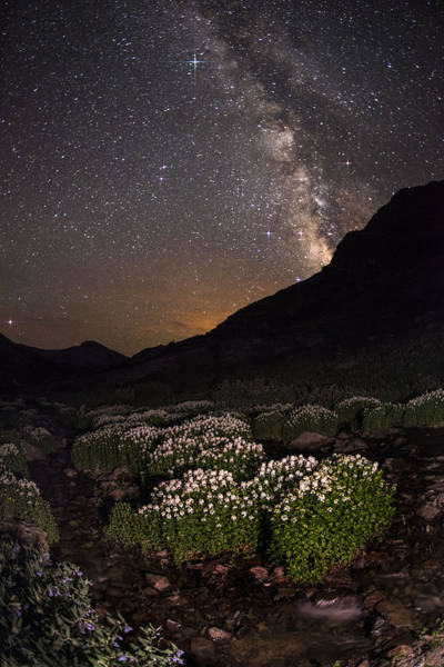 Bluebell Photograph - Wildflower Runoff Under The Stars by Mike Berenson