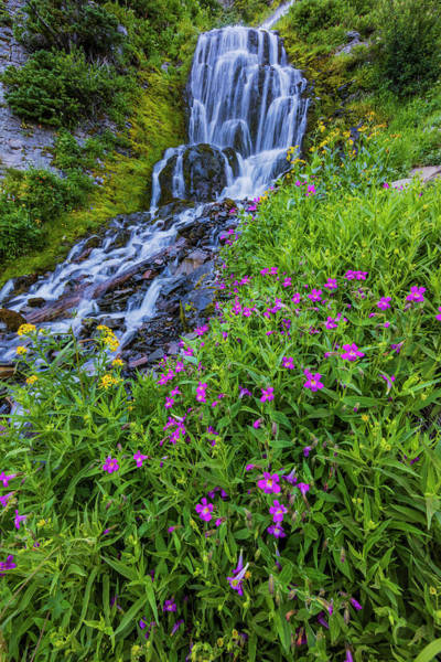 Crater Lake National Park Photograph - Wildflowers Along Vidae Falls In Crater by Chuck Haney
