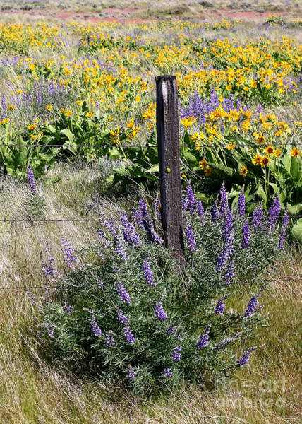 Photograph - Wildflowers And Fence Post by Carol Groenen