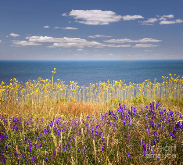 Sea Flowers Wall Art - Photograph - Wildflowers And Ocean by Elena Elisseeva