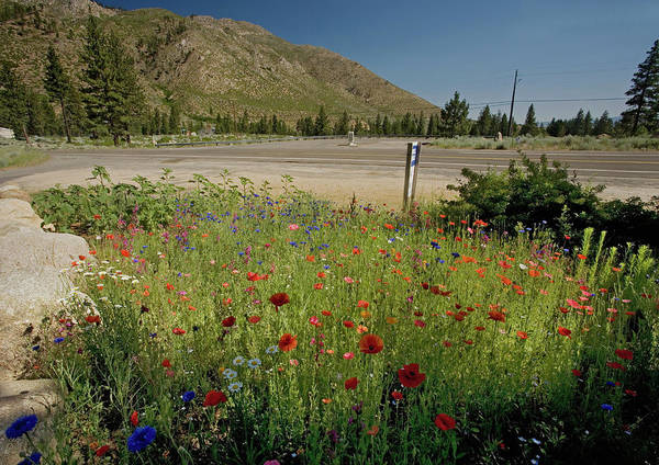 Cornflowers Photograph - Wildflowers At A Roadside by Bob Gibbons/science Photo Library