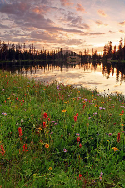 Alpine Lakes Wilderness Photograph - Wildflowers At Clegg Lake. by Johnny Adolphson