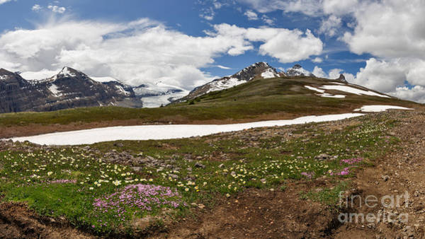 Photograph - Wildflowers Atop The Ridge by Charles Kozierok