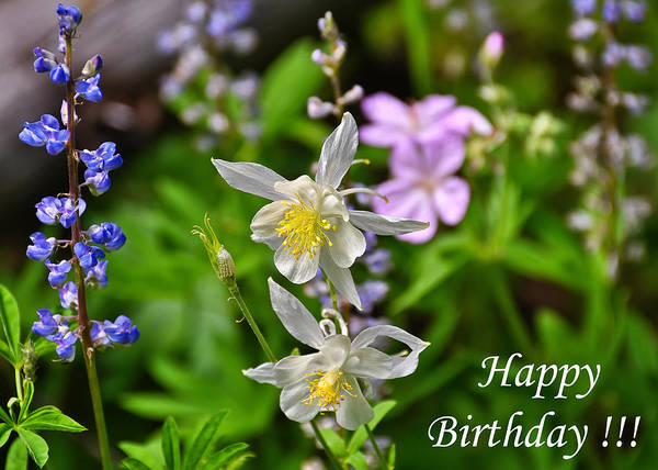 Photograph - Wildflowers Birthday Greeting Card by Greg Norrell