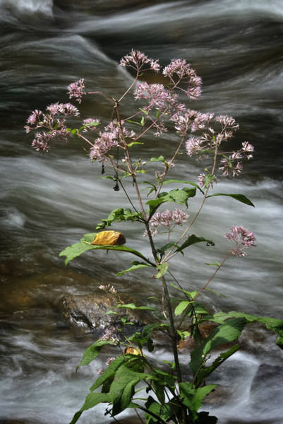 Photograph - Wildflowers By A Stream by George Taylor