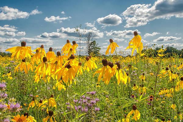 Photograph - Wildflowers Dance by Richard Kopchock