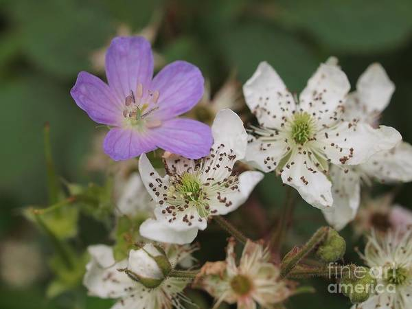 Wall Art - Photograph - Wildflowers by Frank Piercy