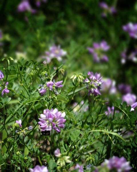 Photograph - Wildflowers by George Taylor