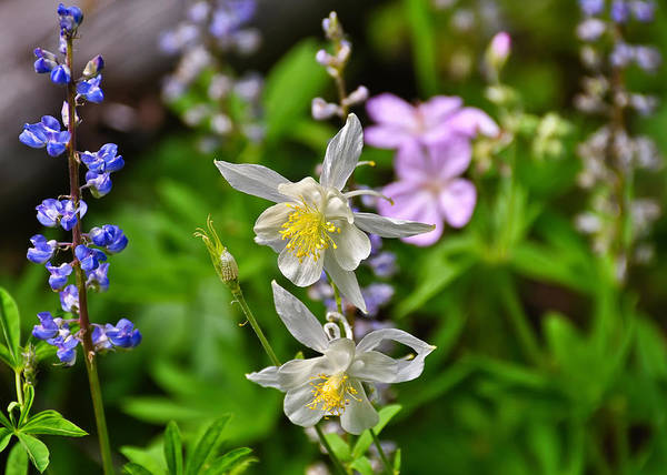 Photograph - Wildflowers Greeting Card by Greg Norrell