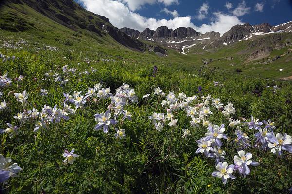 Wall Art - Photograph - Wildflowers In Colorado Mountain Valley by Greg Ochocki