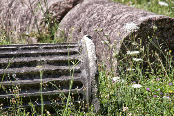 Photograph - Wildflowers In The Roman Forum by Melany Sarafis