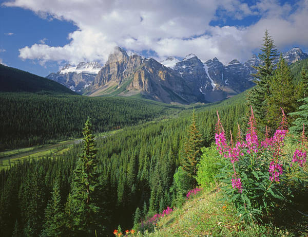 Photograph - 1m3439-wildflowers In The Valley Of Ten Peaks by Ed  Cooper Photography